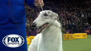 Lucy the Borzoi wins the Hound Group | WESTMINSTER DOG SHOW (2018)| FOX SPORTS