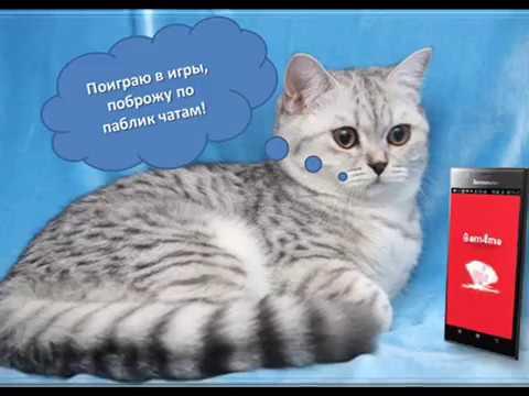 - Онлайн секс чат Москва
