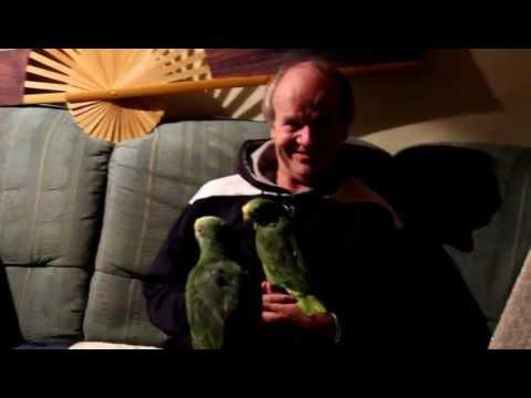 6.11.12. Die Gelbstirn - Amazonen Rico und Bambam hängen mit meinem Besuch ab.