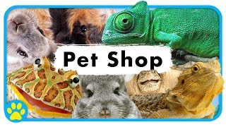 Cute Animals At Little Monsters Pet Centre | Pet Shop Vlog