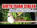 Cipoh Sirtu Gacor Isian Ciblek  Mp3 - Mp4 Download