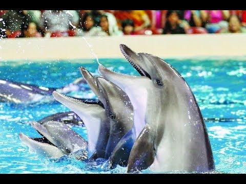 Dubai Dolphinarium – Dolphin, Seal and Exotic Bird Shows