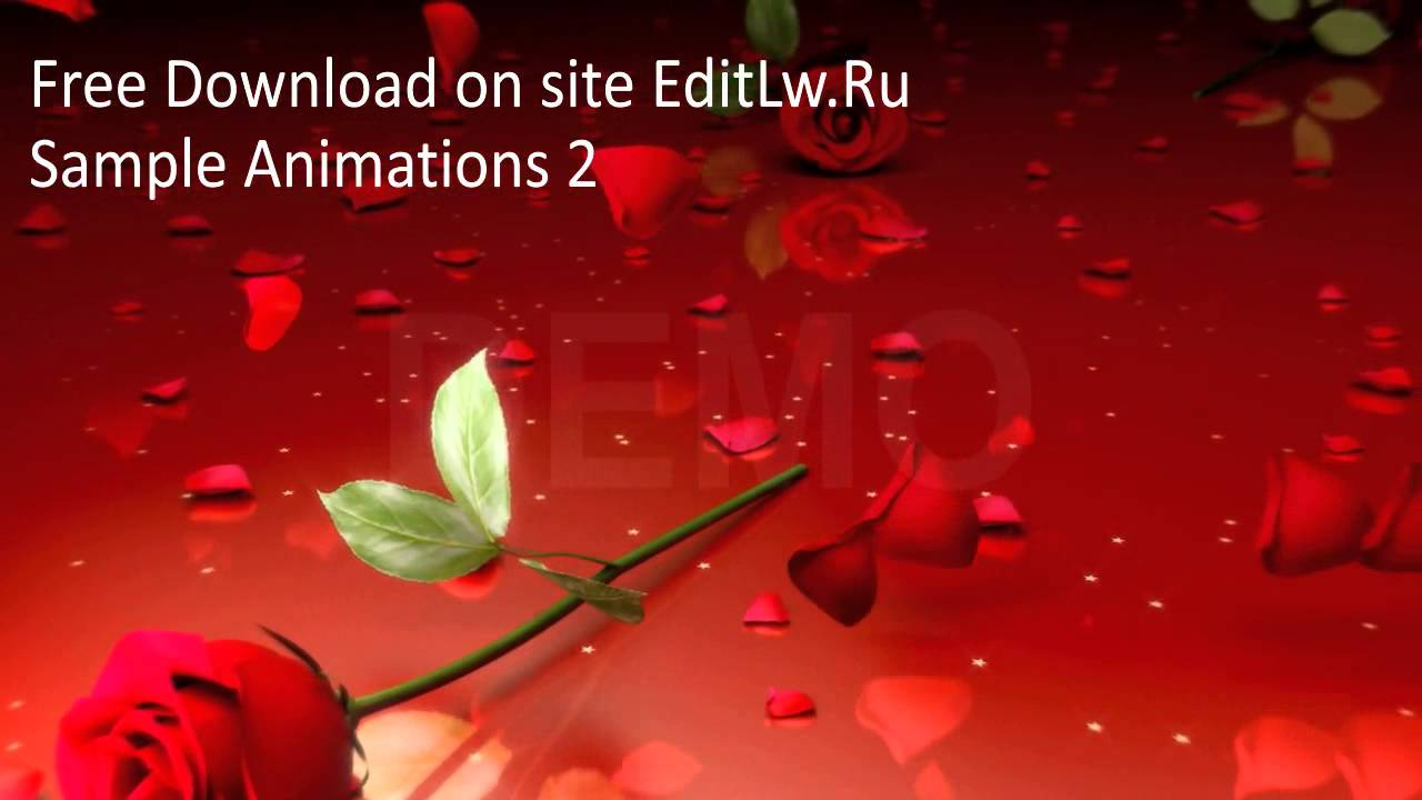 God Animation Wallpaper Red Rose Animation Video Background Hd Footage Free