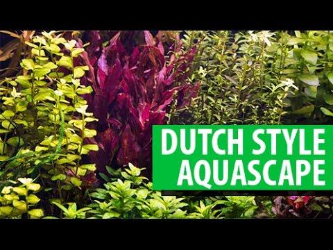 Dutch style Aquascape Indonesia 85L / 22G - YouTube