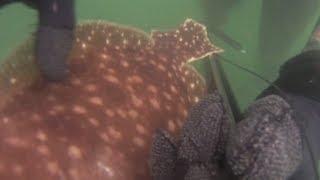 Gambar cover Spearfishing Fluke and Blackfish