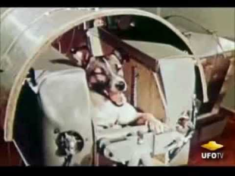 Laika: First Dog In Space «QC'z/AR»