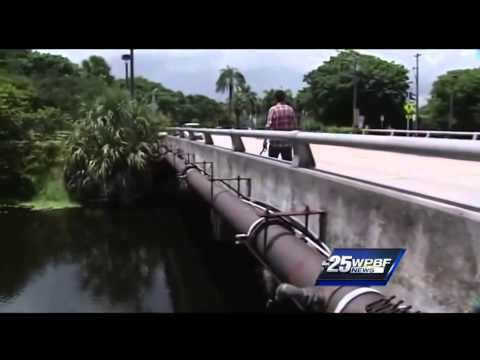 Dog rescued after chasing iguana into waterway