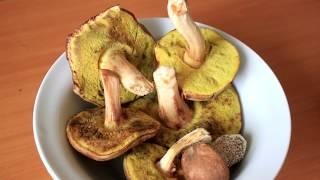 Как приготовить гриб Моховик?