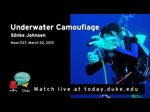 Sönke Johnsen Talks Underwater Camouflage and Vision