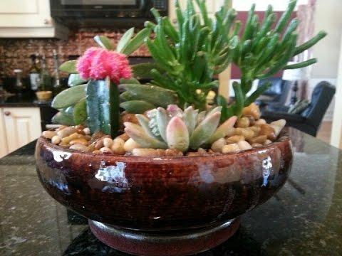 Simple Cactus Garden Ideas YouTube