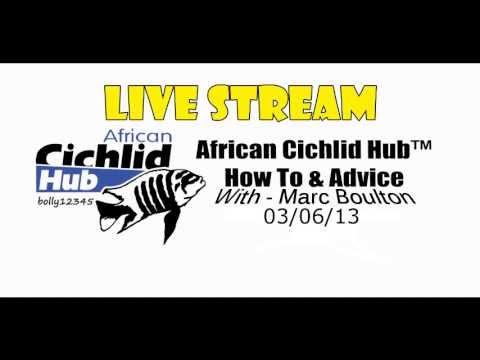 Mbuna Tank Live Stream 3/6/13 - African Cichlid Hub