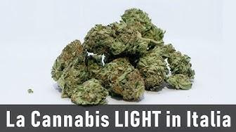 Dove Acquistare la CANNABIS LIGHT online - 100% Legale in Italia