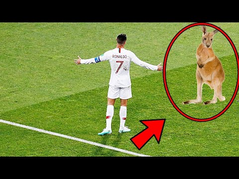 10 MOST INSANE ANIMAL INTERFERENCE IN SPORTS