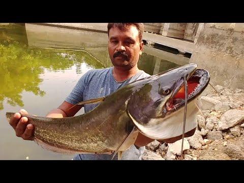 Fishing||fishhunting|| Big Tapha/wallago Attu