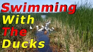 New Predator Problem At The Lake #5 Raising Free Range Ducks