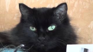 Кошка на серванте / В высоком разрешении глаза, уши, нос