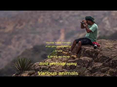 Oman wildlife