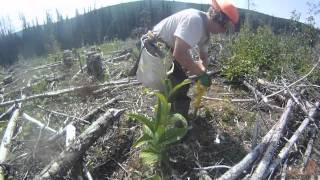 GoPro HD: Treeplanting