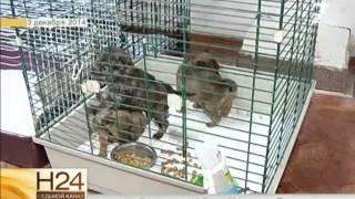 Заявление на владелицу приюта для животных