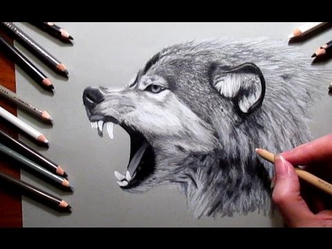 How to Draw a Wolf Pencil #drawing   Jasmina Susak Speed drawing of a wolf