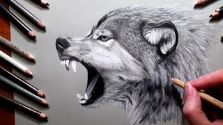 How to Draw a Wolf Pencil #drawing | Jasmina Susak Speed drawing of a wolf(Watch real time video: https://www.youtube.com/watch?v=9gb9Rdq8ZUk Watch more drawing videos: Tiger cub: https://youtu.be/ptxIXnul2X8 Lion: ..., 2015-07-16T00:09:23.000Z)