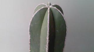 3 Formas De Reproducir Un Cactus