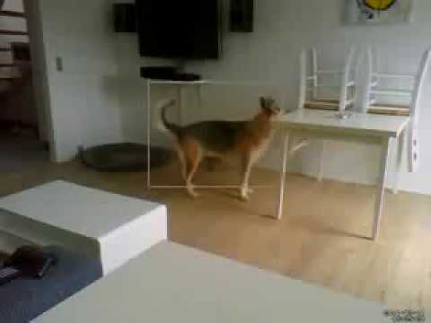 Dog Crap Smear Doovi