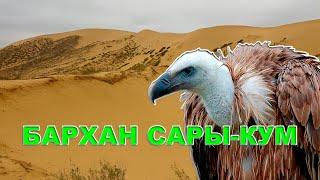 Бархан Сары Кум | Дагестан #кавказ #горыкавказа #путешествия #кавказтуризм #дагестан #сарыкум
