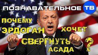 Почему Эрдоган хочет свергнуть Асада? (Познавательное ТВ, Артём Войтенков)