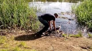 Ловля сома река Рось Белая Церковь