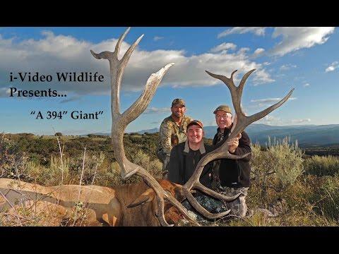 Giant Bull Elk   Fishlake Utah