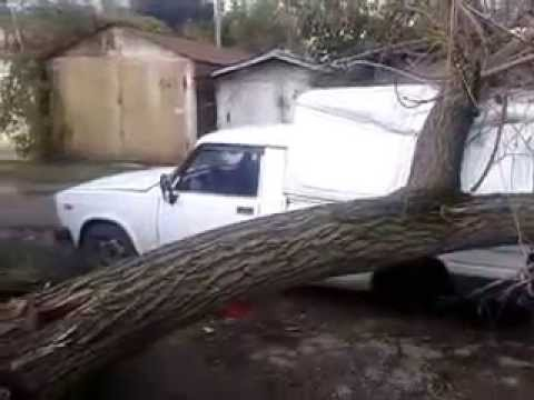 Опасный Краснодар, летающие деревья