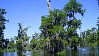Avery Island Bayou Teche