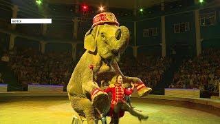 Итальянский цирк «Слоны и тигры» поразил якутян