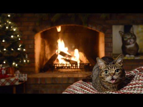 Lil BUB's Magical Yule LOG Video 2016