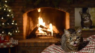 Lil BUB's Magical Yule LOG Video 2016 thumbnail