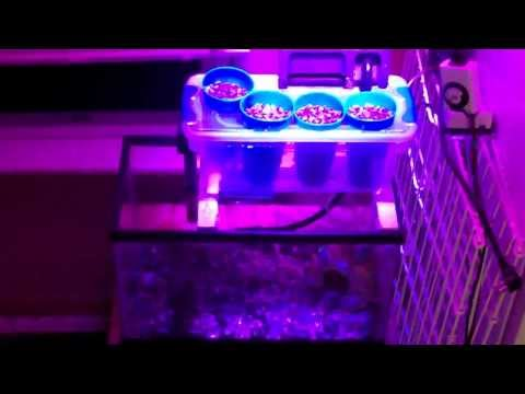 Small Scale Aquaponic System Quick Overview
