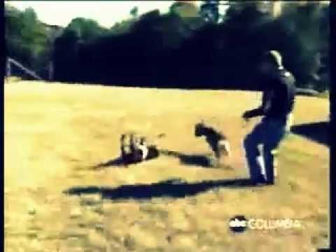 Видео Приколы животными И Козы