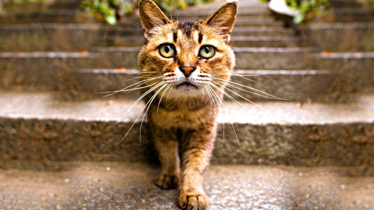 زوجة طلبت من زوجها التخلص من القط، ولكن بعد ثلاثة أشهر حدث ما لم يتوقعه أحد