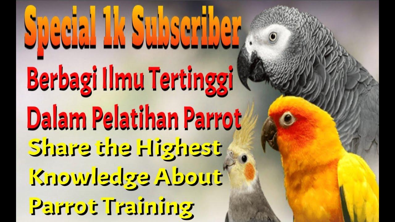 Tutorial Ilmu Tertinggi Dalam Pelatihan Parrot | Parrot Training
