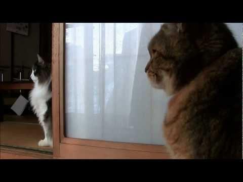 何かを発見するうちのねこ-cats-to-discover-something