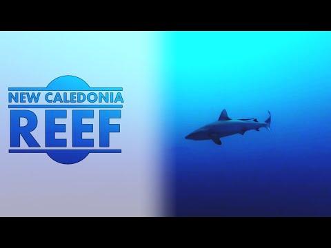 Scuba Diving l New Caledonia Reef