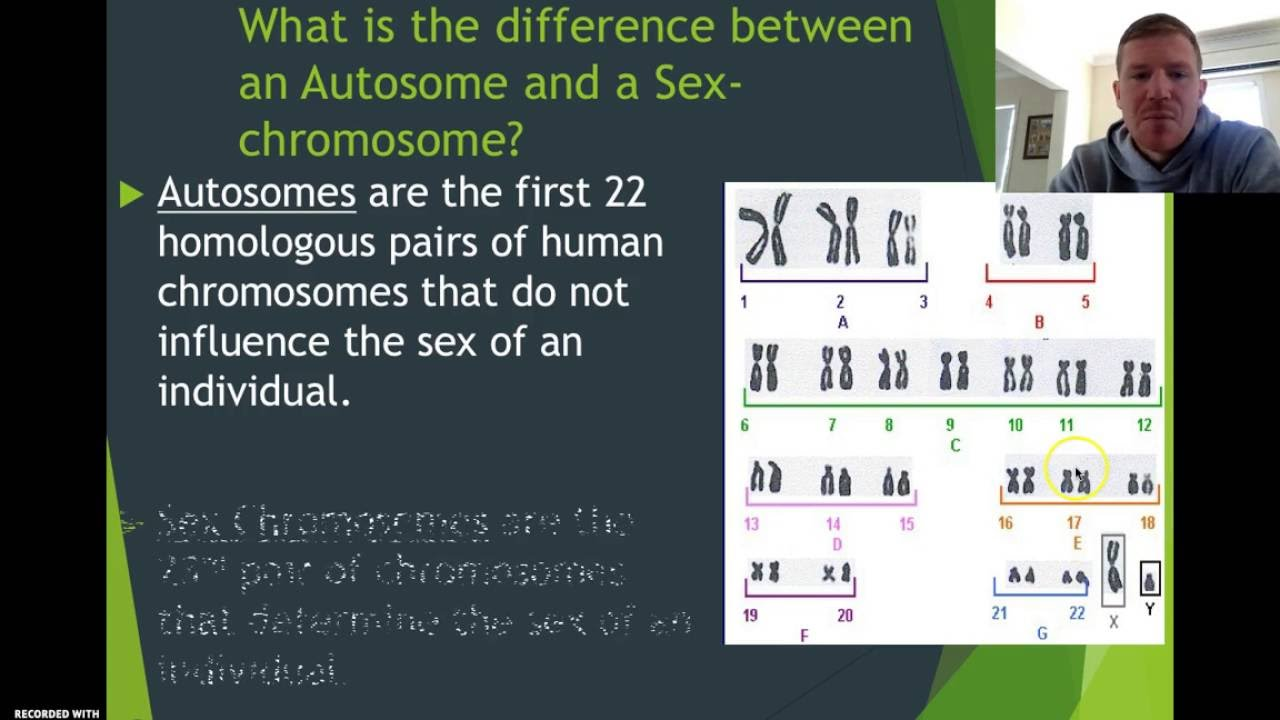 Autosomes V Sex Chromosomes - Mr H - Youtube-9689