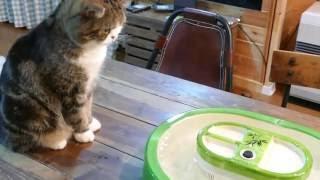 流しそうめんとねこ。-Flowing noodles and Maru.-