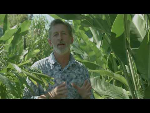 Plants for Privacy in Subtropics