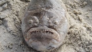 25 sea creatures you would never want to meet