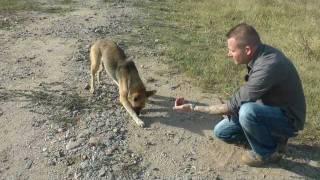 Das Hundeleid in Rumänien  (Von Bukarest bis Transilvanien 2011)