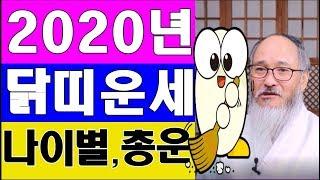 2020년 닭띠운세# 돈을 쓸어오는 00년생 # 닭띠 신년 토정비결