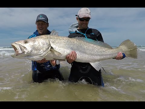 Mulloway Or Cob? How To Read Water And Find Them In The Surf Zone. Lock Down Blues.