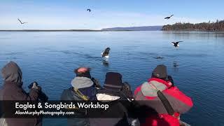 Eagles & Songbirds Workshop